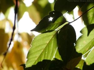10:21:14 green leaf sun sig
