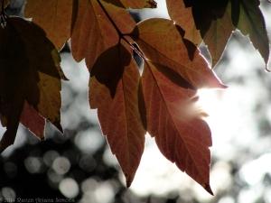 10:21:14 sun leaves edge sig