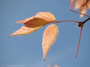 10:22:14 leaves blue sky sig