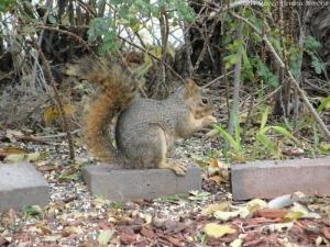 10:25:14 squirrel sig