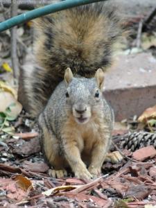 10:25:14 squirrel v sig