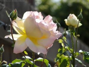 10:27:14 roses sig