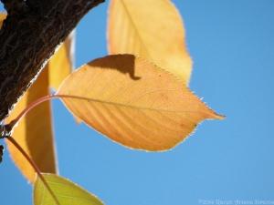 10:29:14 leaf sig
