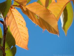 10:29:14 leaves sig