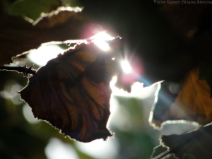 10:31:14 h leaf sig