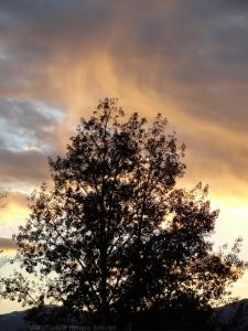 11:10:14 tree s v sig