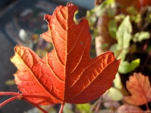 11:12:14 bright leaf sig