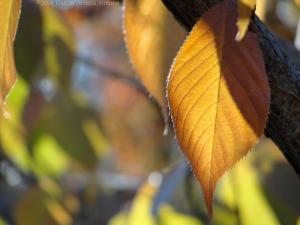 11:12:14 leaf 1 sig
