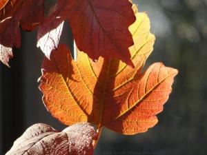 11:12:14 s leaf 1 sig