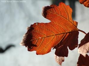 11:12:14 s leaf sig