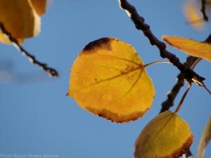 11:16:14 a leaf 1 sig