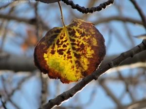 11:16:14 a leaf sig
