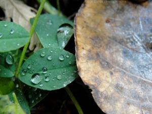 11:22:14 drops leaf sig