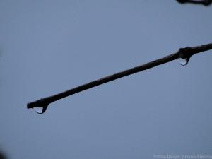 11:22:14 twig 2 drops sig
