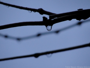 11:22:14 twig drops sig