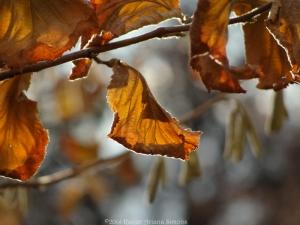 11:24:14 leaf 1 sig