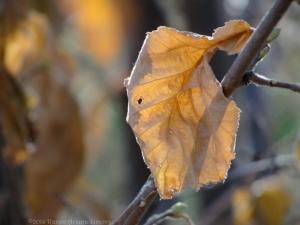 11:24:14 leaf 2 sig