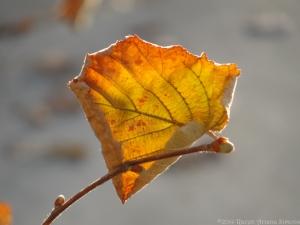 11:24:14 leaf sig
