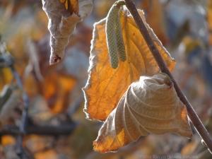 11:24:14 leaves sig