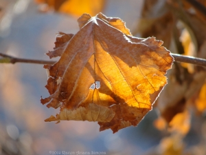11:24:14 nice leaf sig