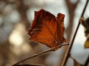 11:24:14 upright leaf sig