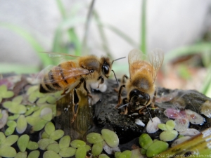 11:27:14 two bees 1 sig