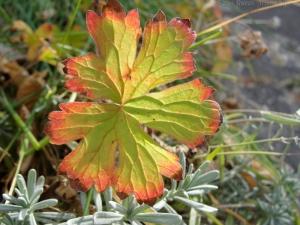 11:3:14 leaf sig