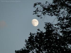 11:3:14 moon sig