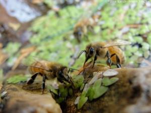 11:3:14 three bees 1 sig