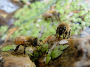 11:3:14 three bees sig