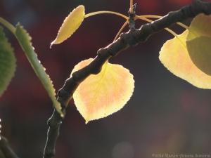 11:4:14 a leaf sig
