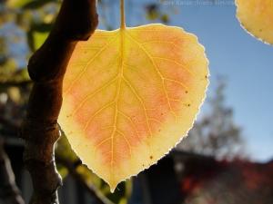 11:4:14 close leaf sig
