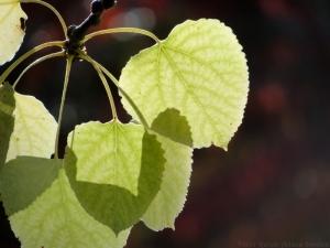 11:4:14 leaves close sig