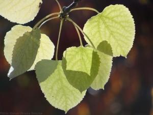 11:4:14 leaves sig