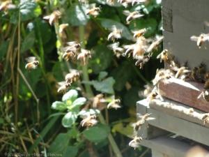 11:6:14 bees 2 sig