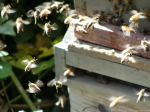 11:6:14 bees 5 sig