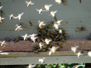 11:6:14 bees 7 sig