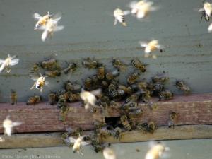 11:6:14 bees 8 sig