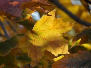11:6:14 leaf sig