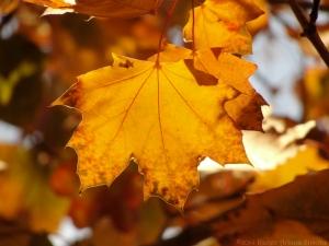 11:6:14 leaves close sig