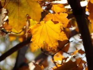 11:6:14 leaves sig