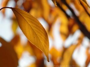 11:7:14 g leaf sig