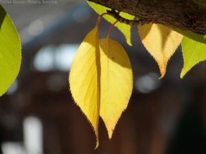 11:7:14 yellow hangers sig