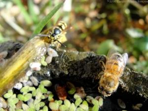 12:1:14 bee wasp sig