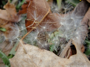 12:12:14 seeds sig