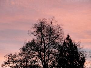 12:24:14 trees pink sig