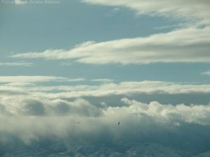 12:26:14 clouds:mts:plane:bird sig