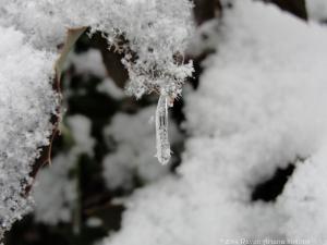 12:28:14 ice drop sig