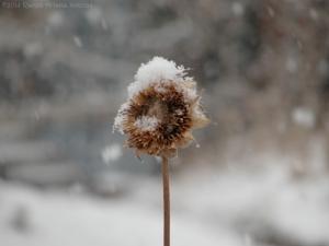 12:28:14 snowing sig