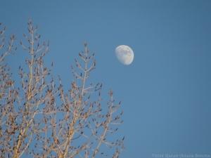 12:31:14 moon sig